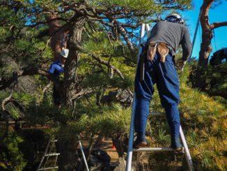 Focus sur les principales erreurs à éviter en matière d'élagage d'arbre